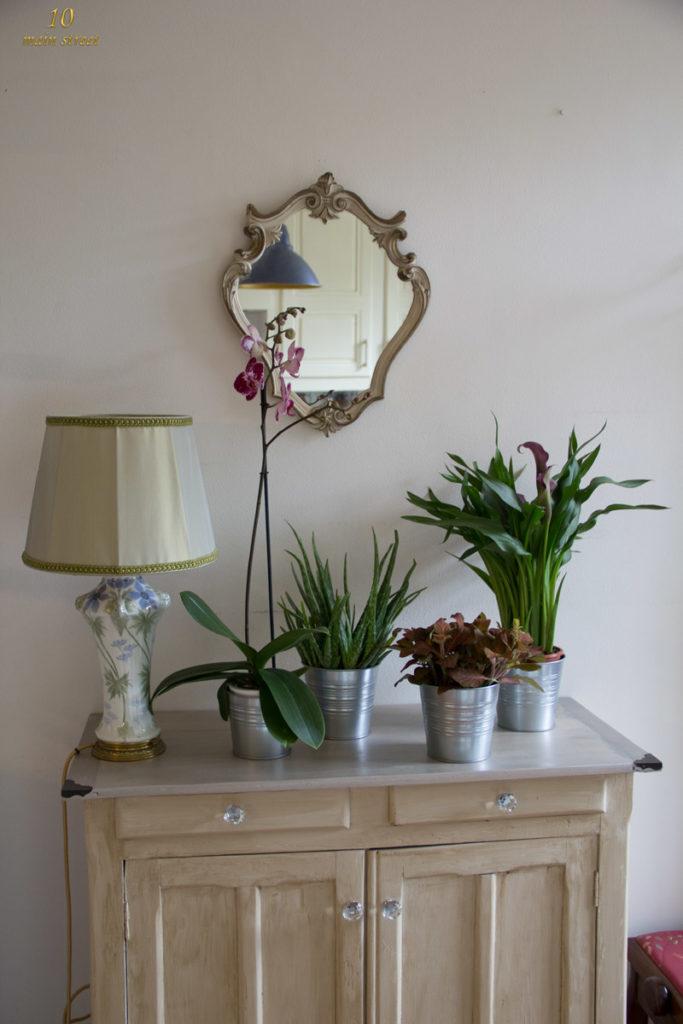 Jolies plantes dont un phalaenopsis