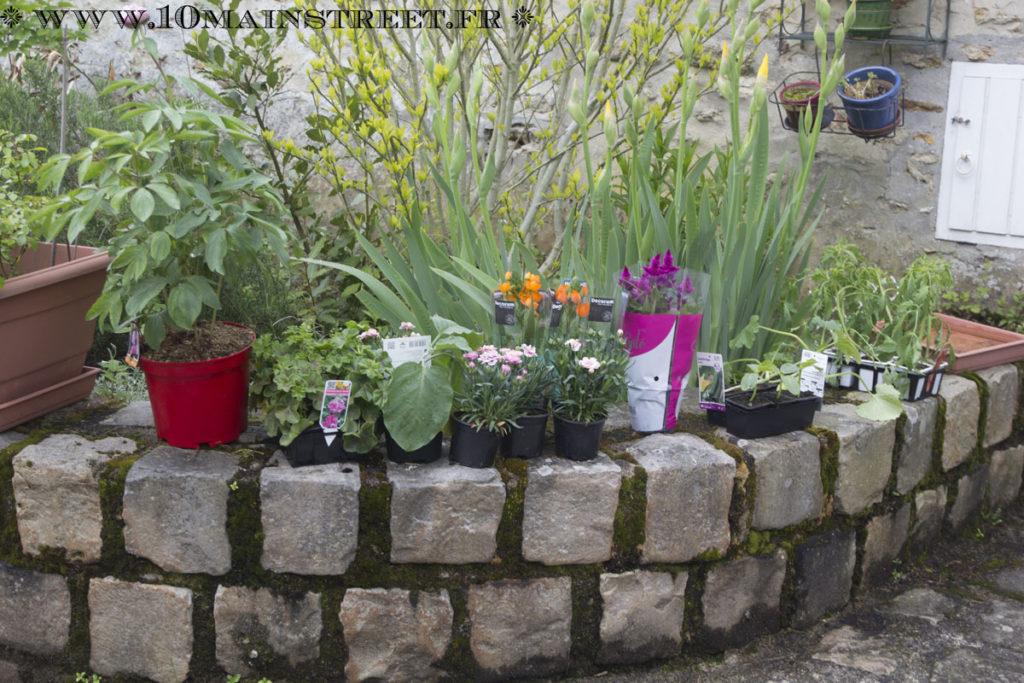 Géraniums, œillets, fleurs et légumes