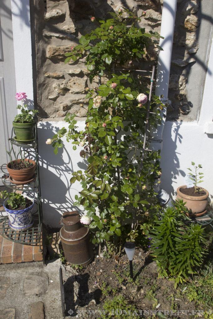 Luminaire solaire Aglaia devant le rosier Ronsard