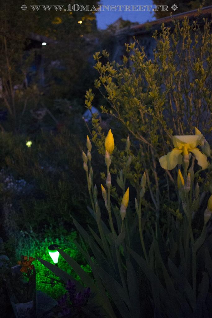 Iris et luminaire solaire