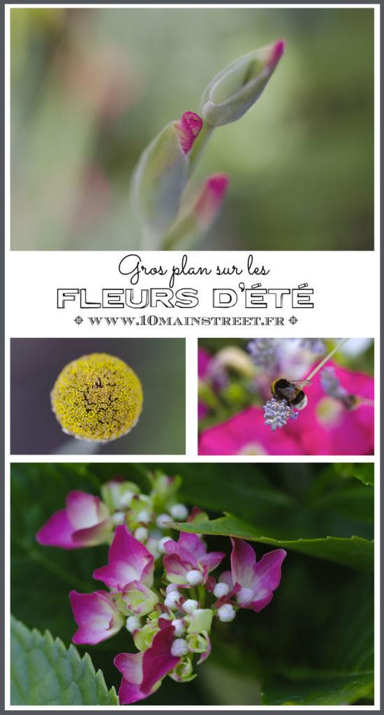 Gros plan sur les fleurs d'été