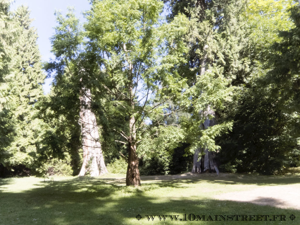 Arbres du Stanley Park