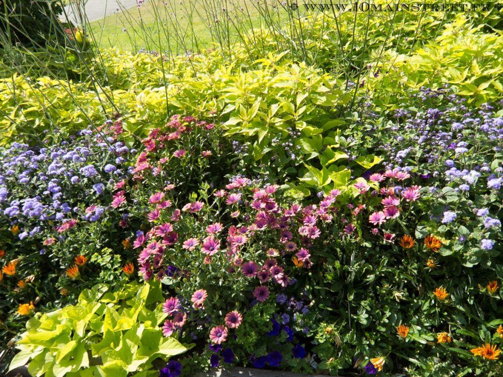 Massif fleuri du Stanley Park