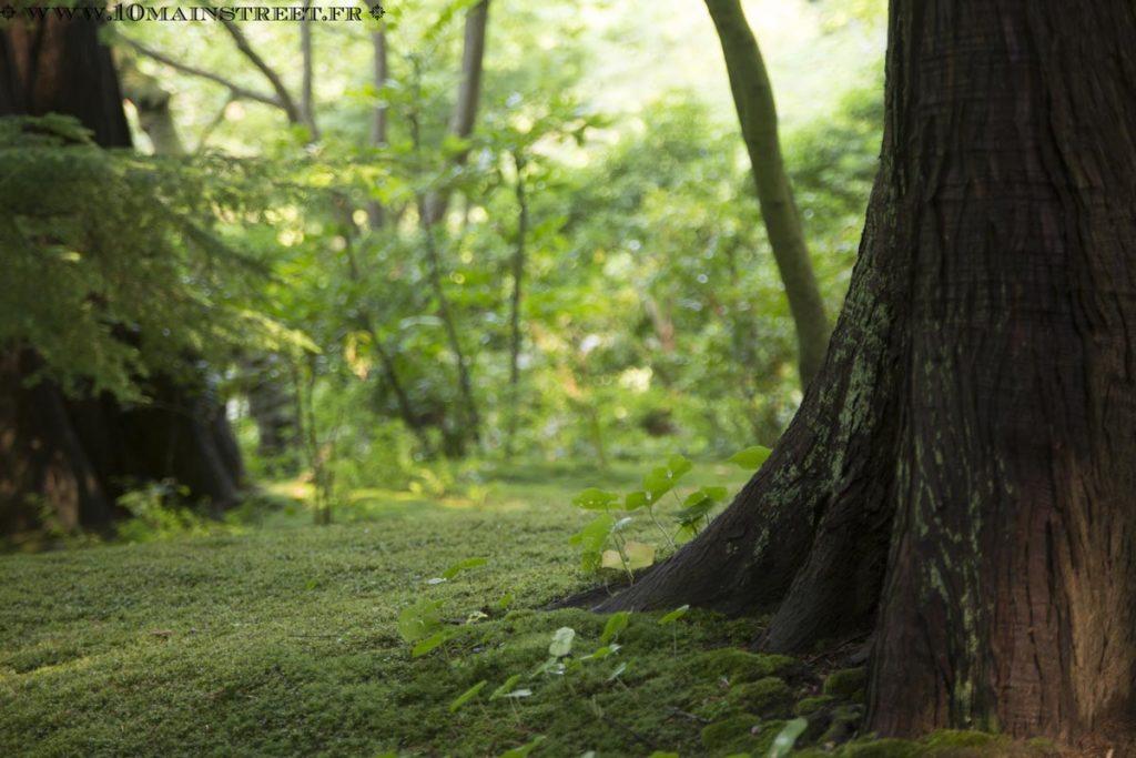 Red cedar sur lequel pousse de la mousse au Nitobe Memorial Garden