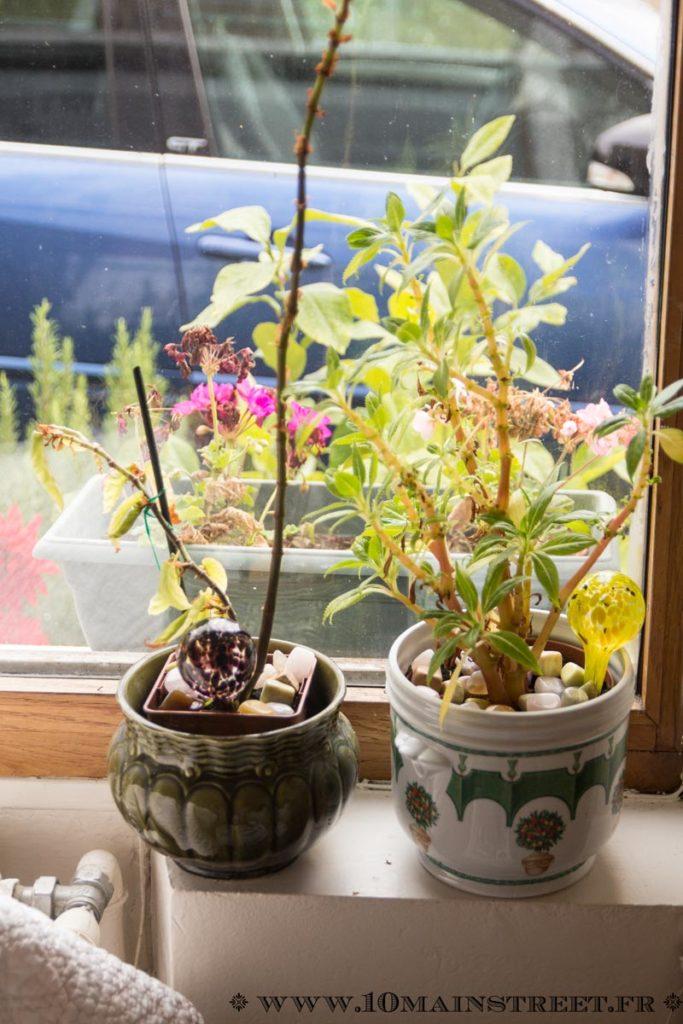 Cailloux de la salle de bain installés dans les plantes
