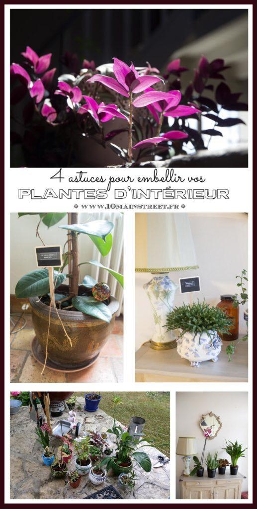 4 astuces pour embellir vos plantes d'intérieur