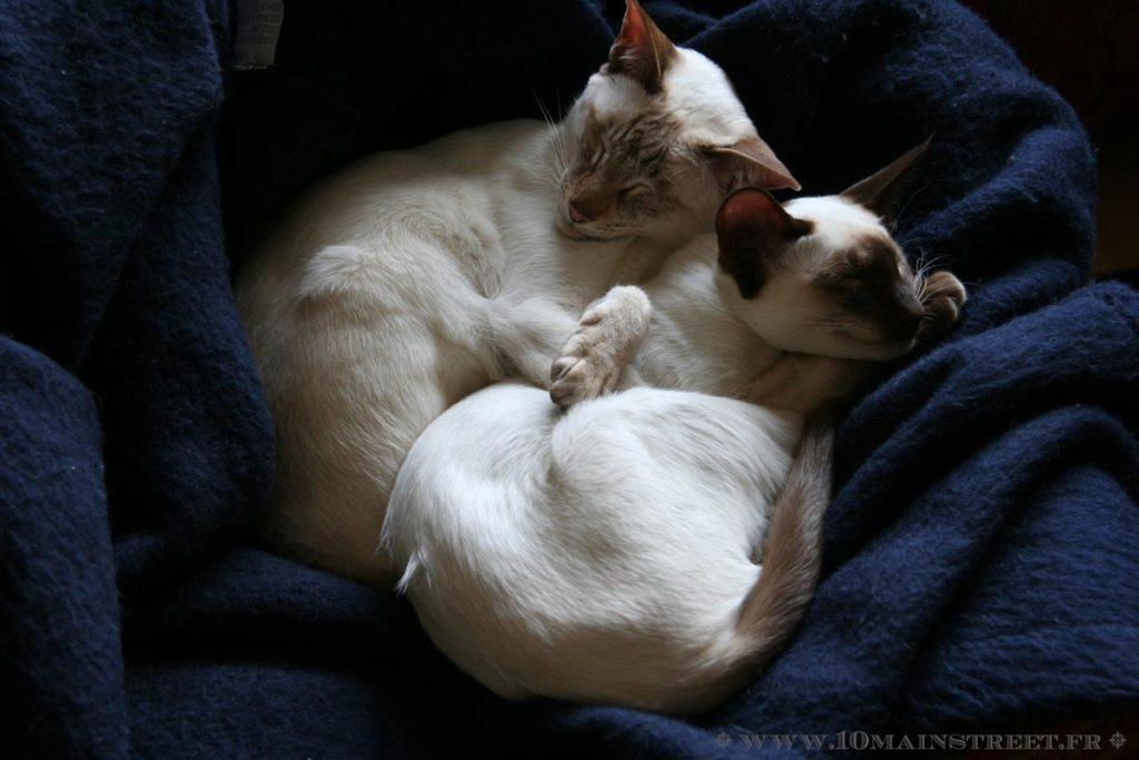 Dinah et Nicolas dormant ensemble (2009)