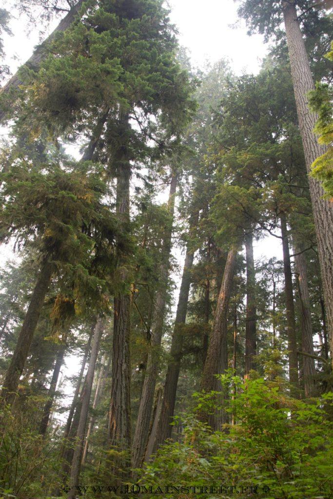 Forêt de Douglas au parc MacMillan