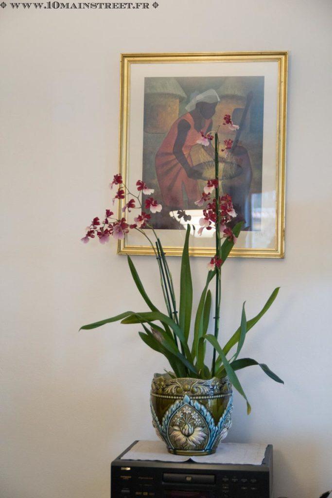 Magnifique Vanda en fleurs