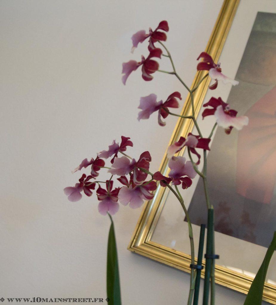Fleurs de Vanda
