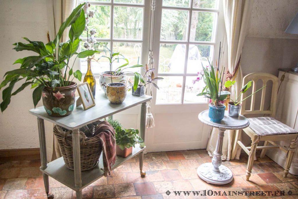 Installation de plantes devant la fenêtre