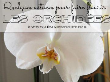 Faire fleurir les orchidées : quelques astuces