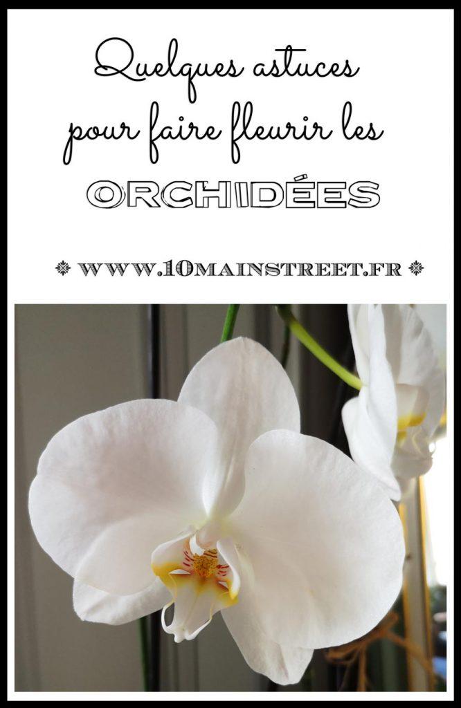 Faire fleurir les orchidées : quelques astuces | arrosage, exposition | #orchidees #phalaenopsis #jardinage #urbanjungle