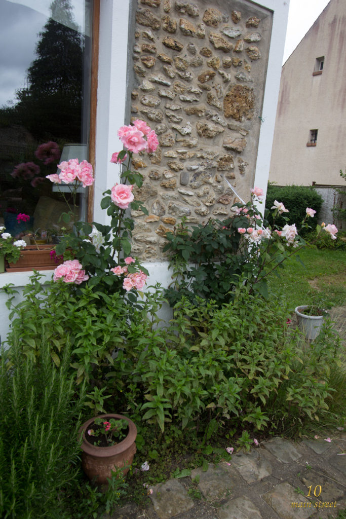 Rosiers roses et menthe