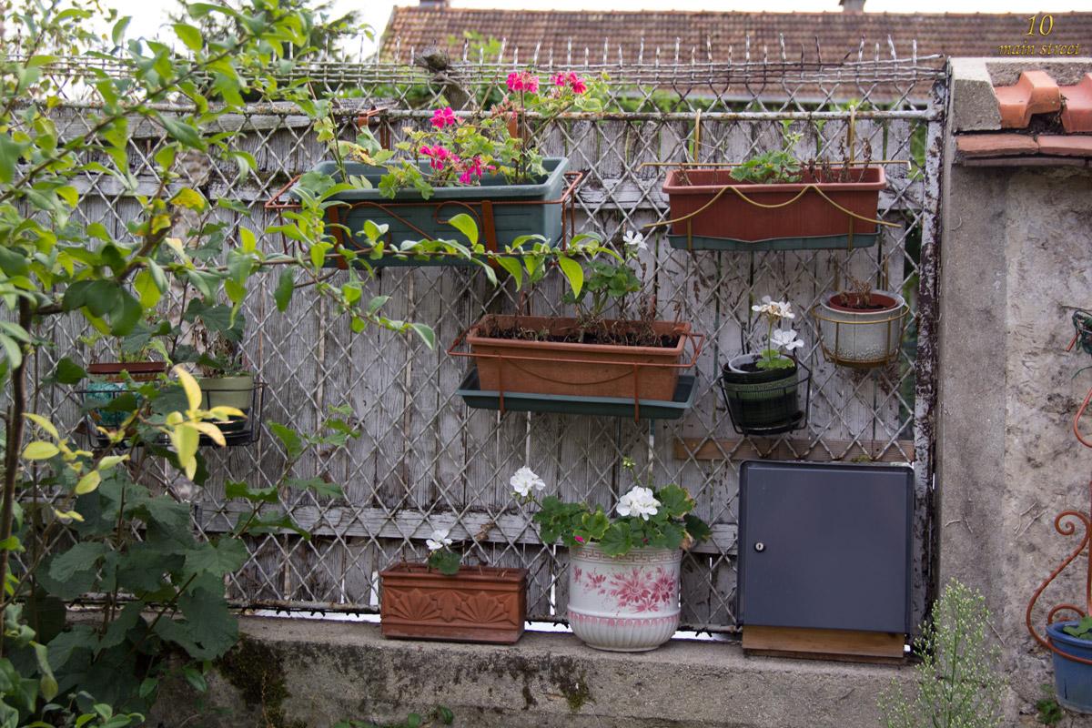 le jardin et toutes ses fleurs la fin du mois d 39 ao t. Black Bedroom Furniture Sets. Home Design Ideas