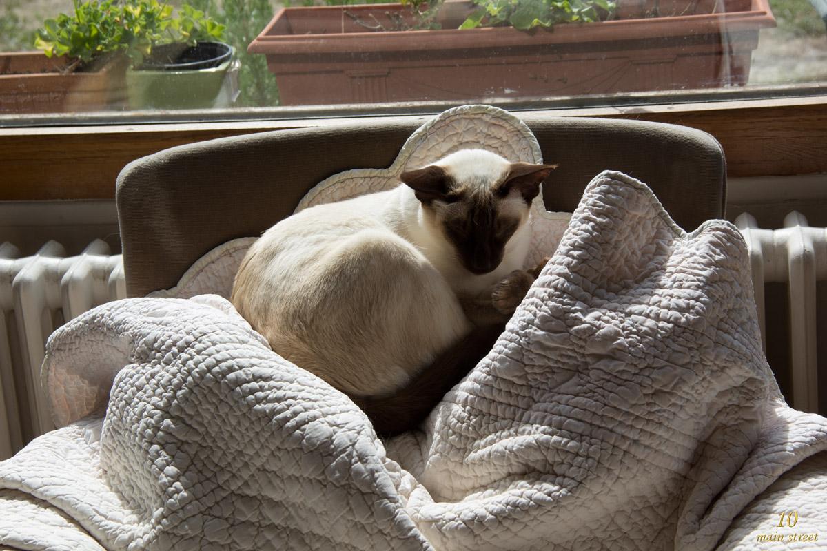projet diy facile un griffoir chat de luxe pour dinah. Black Bedroom Furniture Sets. Home Design Ideas
