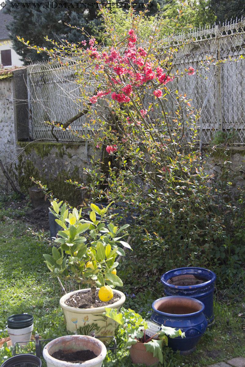 Un petit tour au jardin au printemps 2017 des fleurs for Fleurs au jardin