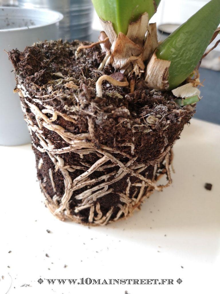 Orchidées dans un compost inadapté parce que trop compact