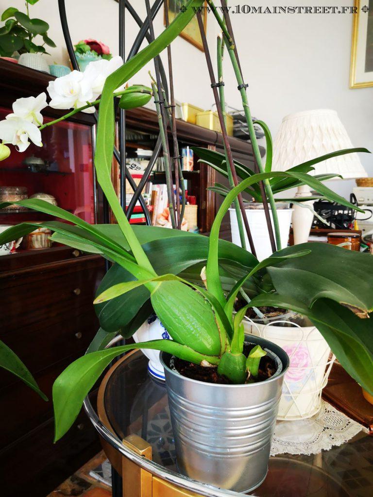 Orchidée rempotée et réinstallée au même endroit, dans le salon
