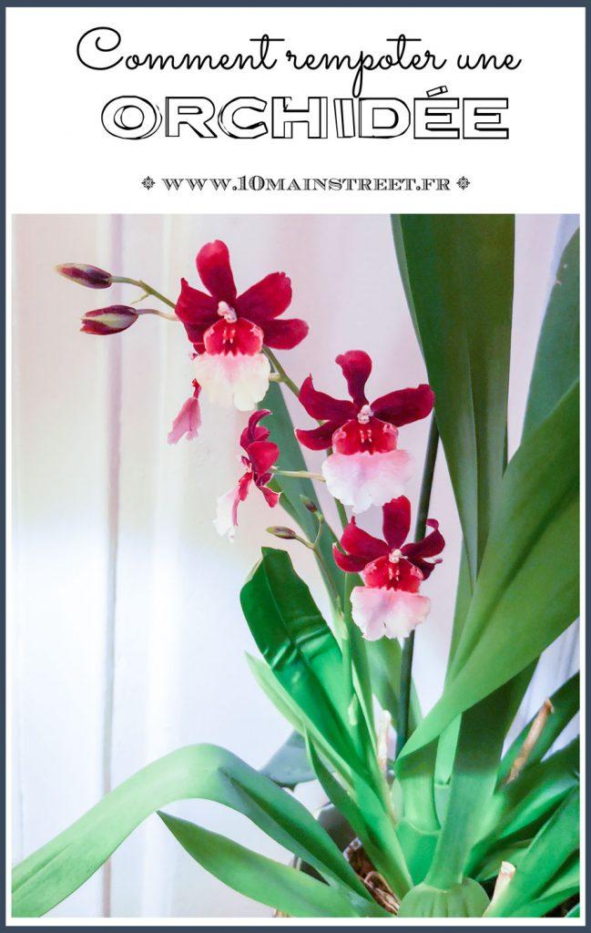 Comment rempoter une orchidée ? Choix du compost, entretien des racines... #orchids #plantes