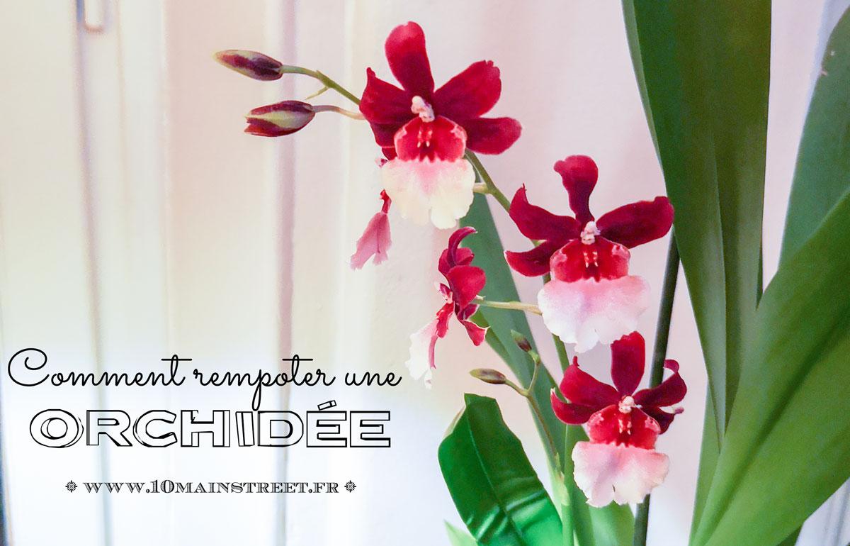 Comment rempoter une orchidée