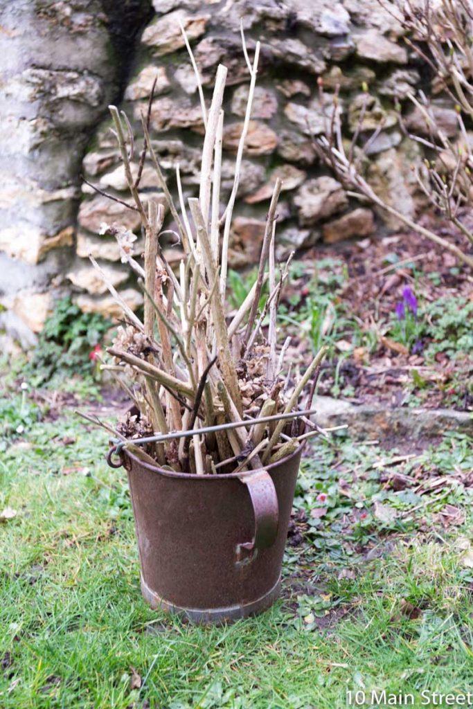 Branches d'hortensia coupées