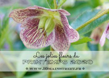 Les jolies fleurs du printemps 2020