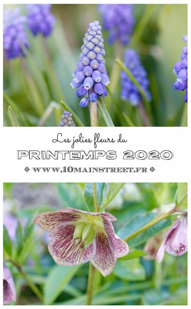 Les jolies fleurs du printemps 2020 - jardinage - 10 Main Street