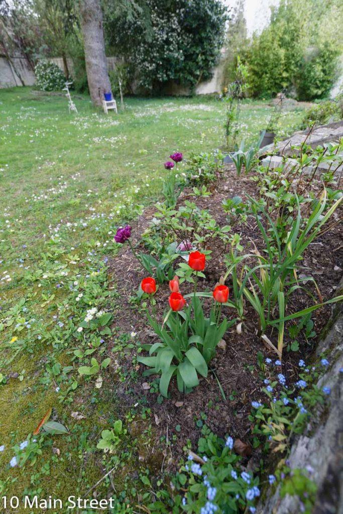 Tulipes de la terrasse