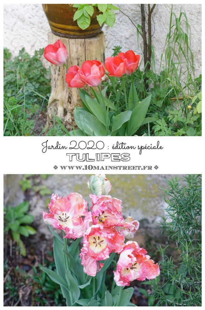 Jardin 2020 : édition spéciale tulipess