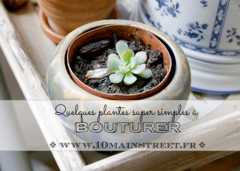 Bouturer : quelques plantes super simples