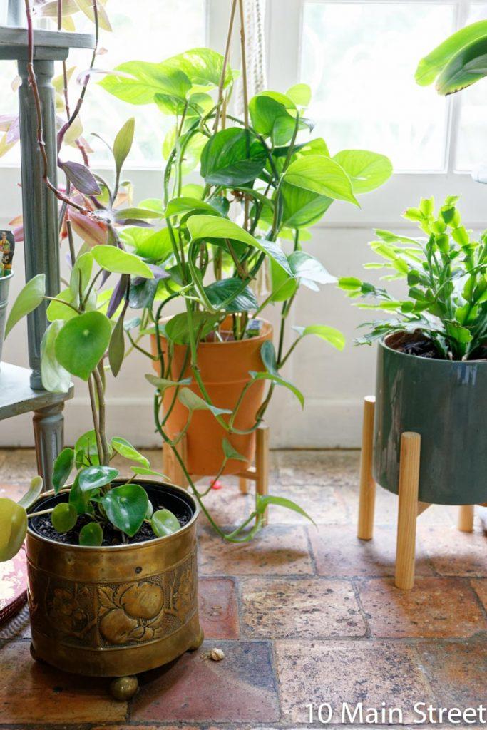 Cadeau DIY pour amateur de plantes : la bouture prélevée soi-même !