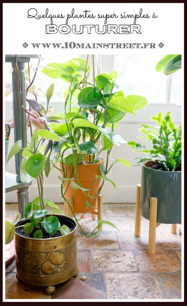 Bouturer : quelques plantes super simples ! - multiplication - boutures - plant-nursery - 10 Main Street