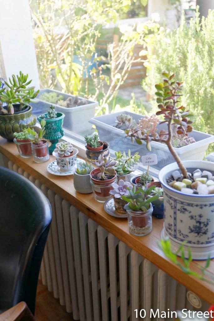 Plantyes sur le rebord de fenêtre