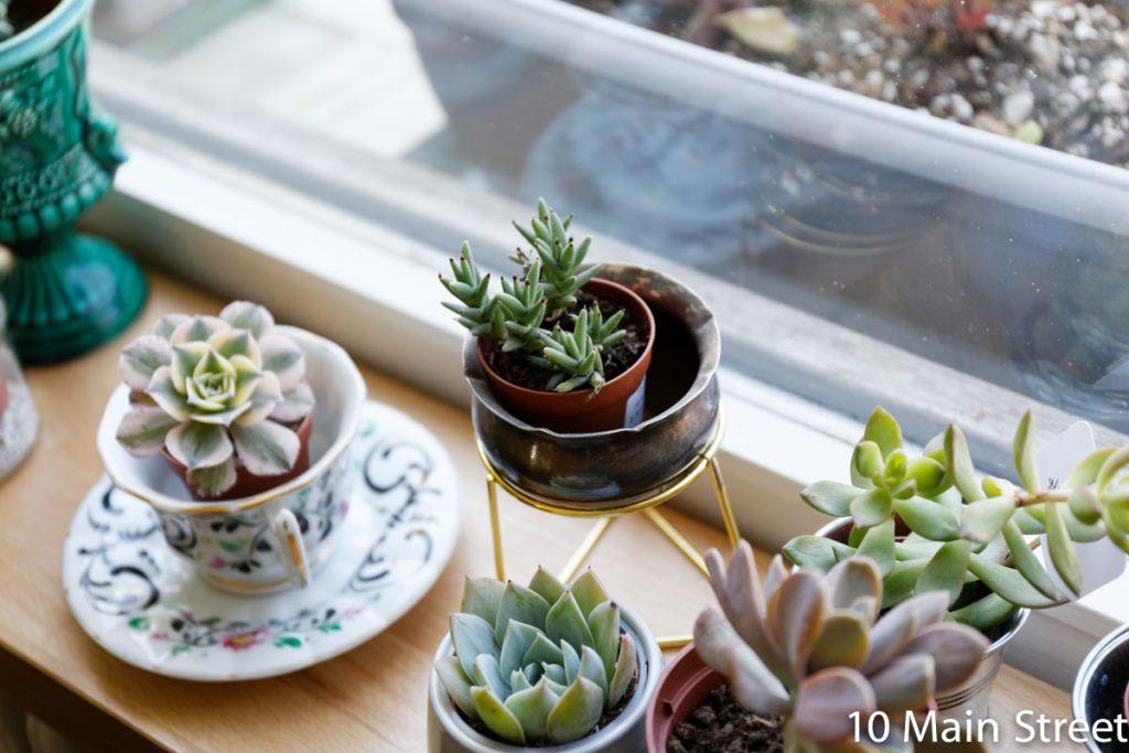 Succulentes dans des tasses et cache-pots miniatures