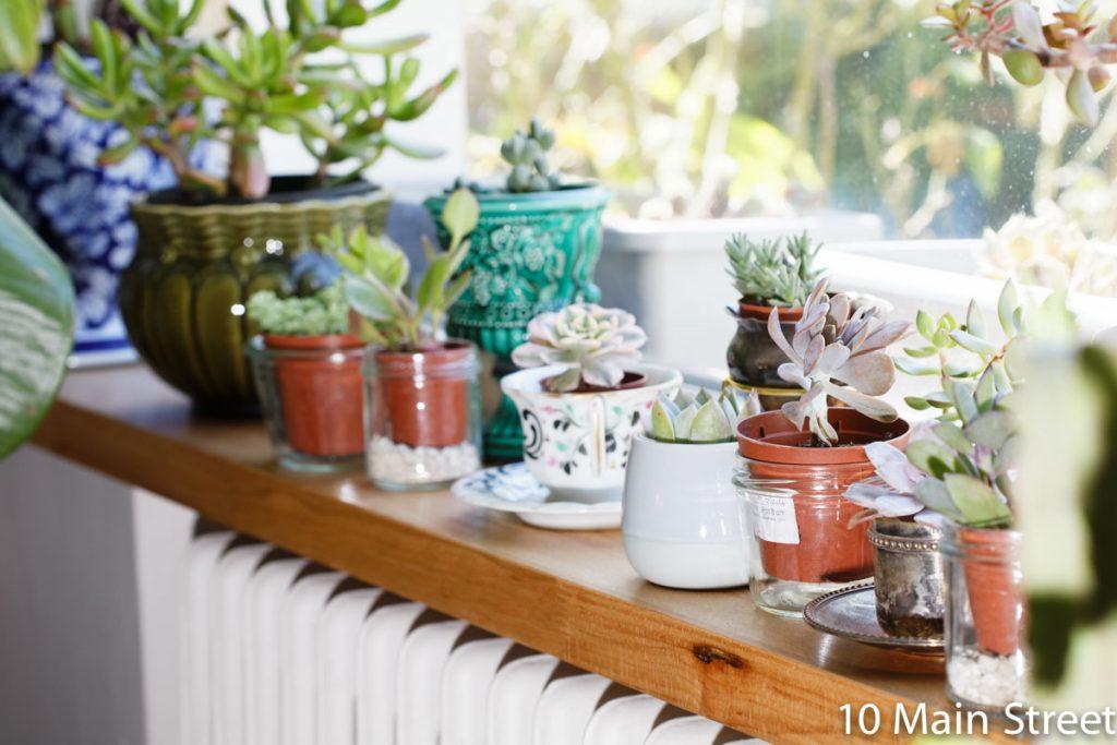 Installation provisoire des succulentes