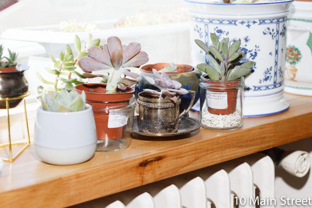 Plantes succulentes sur le rebord de la fenêtre
