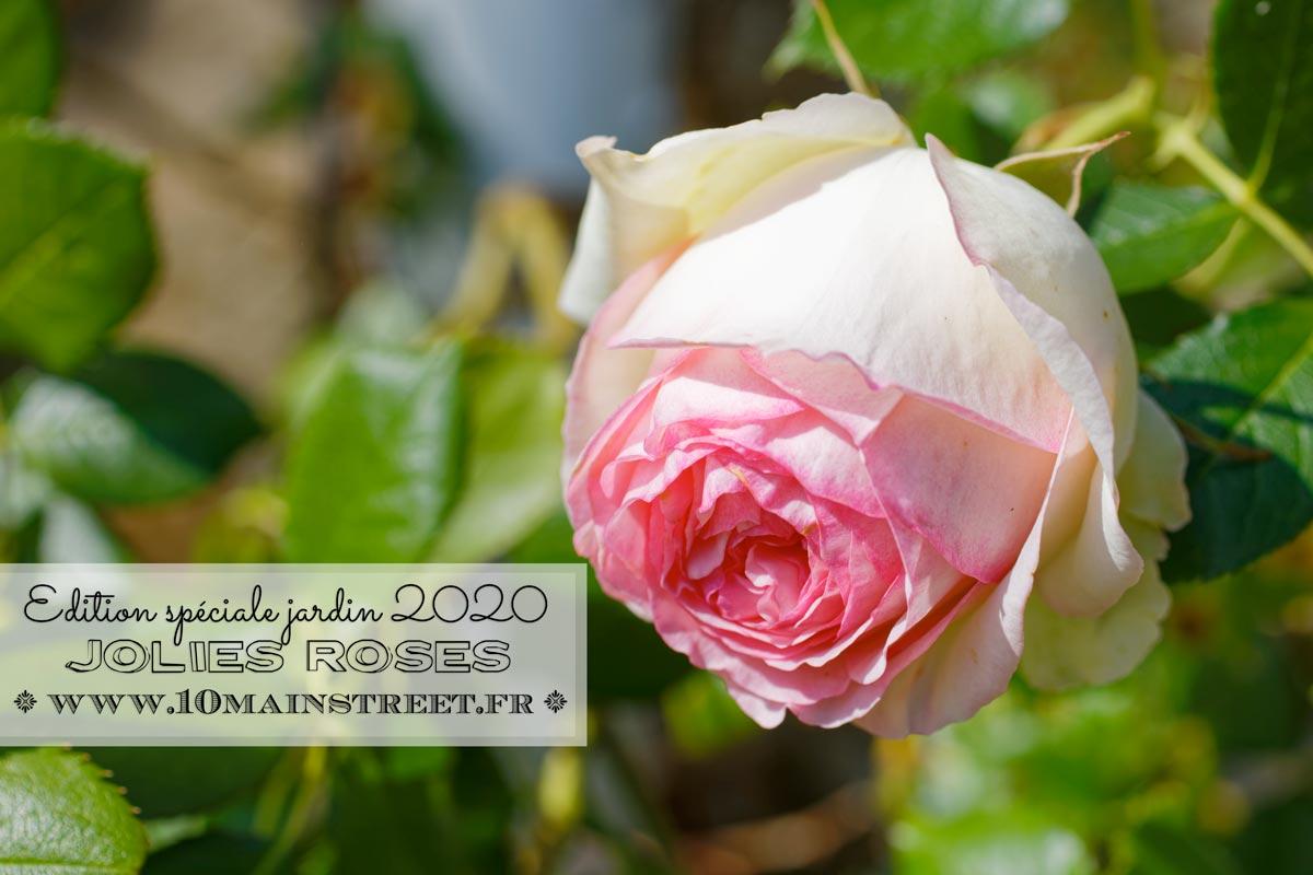 Les jolies roses : édition spéciale jardin 2020