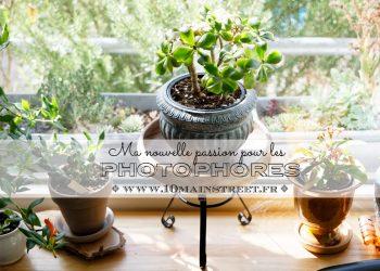 Le photophore : ma nouvelle passion ! Des supports à plante à l'infini !!!