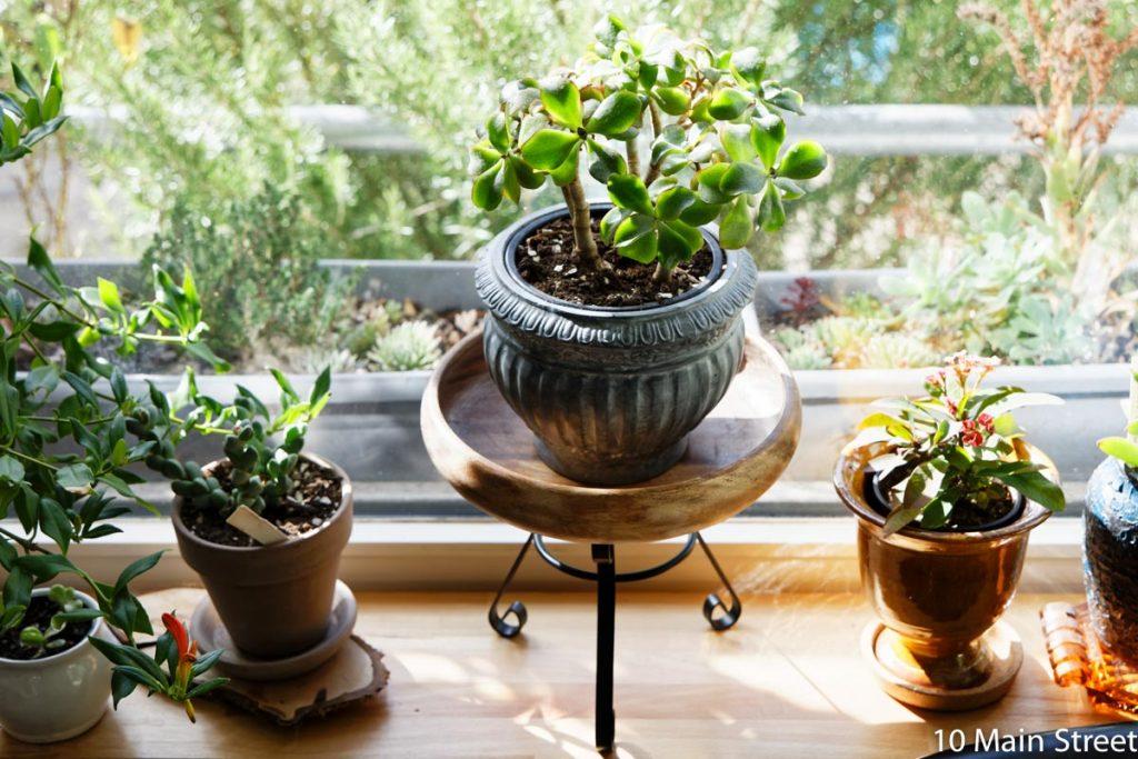 Le photophore converti en support à plante dans le salon