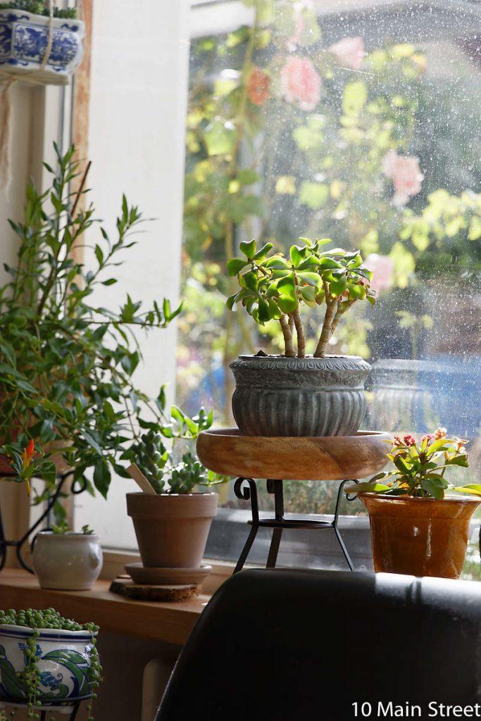 Supports à plante réalisés à partir de photophores