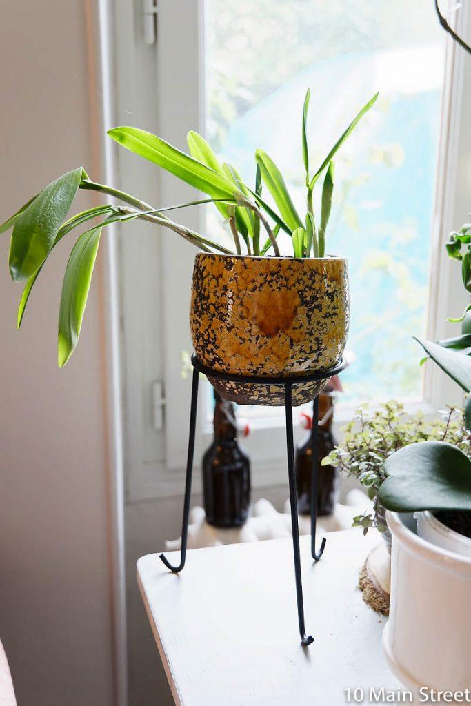 Orchidée cattleya sur un photophore en fer forgé