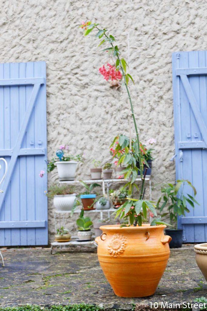 Le bégonia dans son cache-pot orange