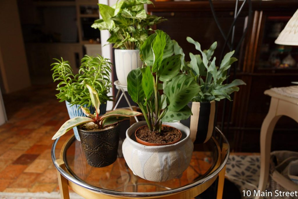 Cadeaux DIY pour amateurs de plantes : Le cache-pot customisé