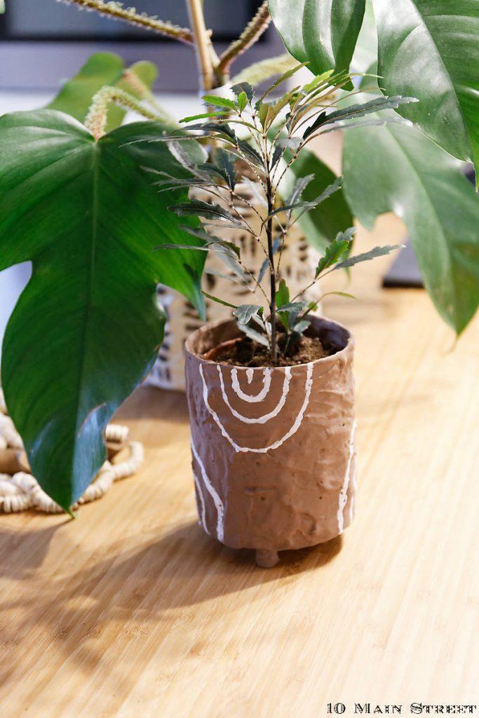 Shefflera faux aralia dans son cache-pot boho