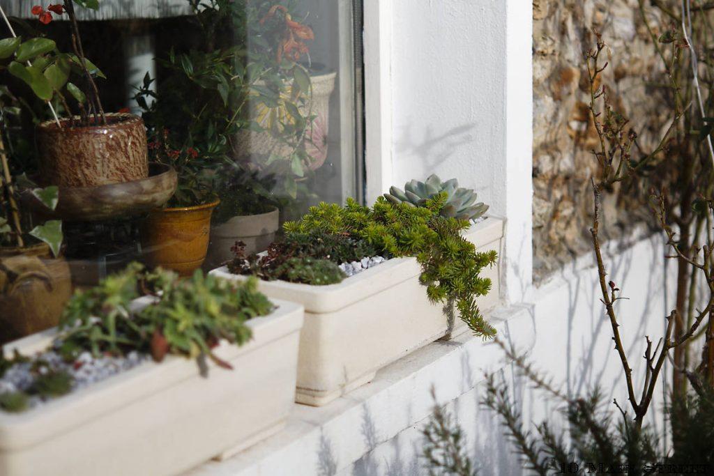 Plantes grasses rustiques et demandant peu d'entretien