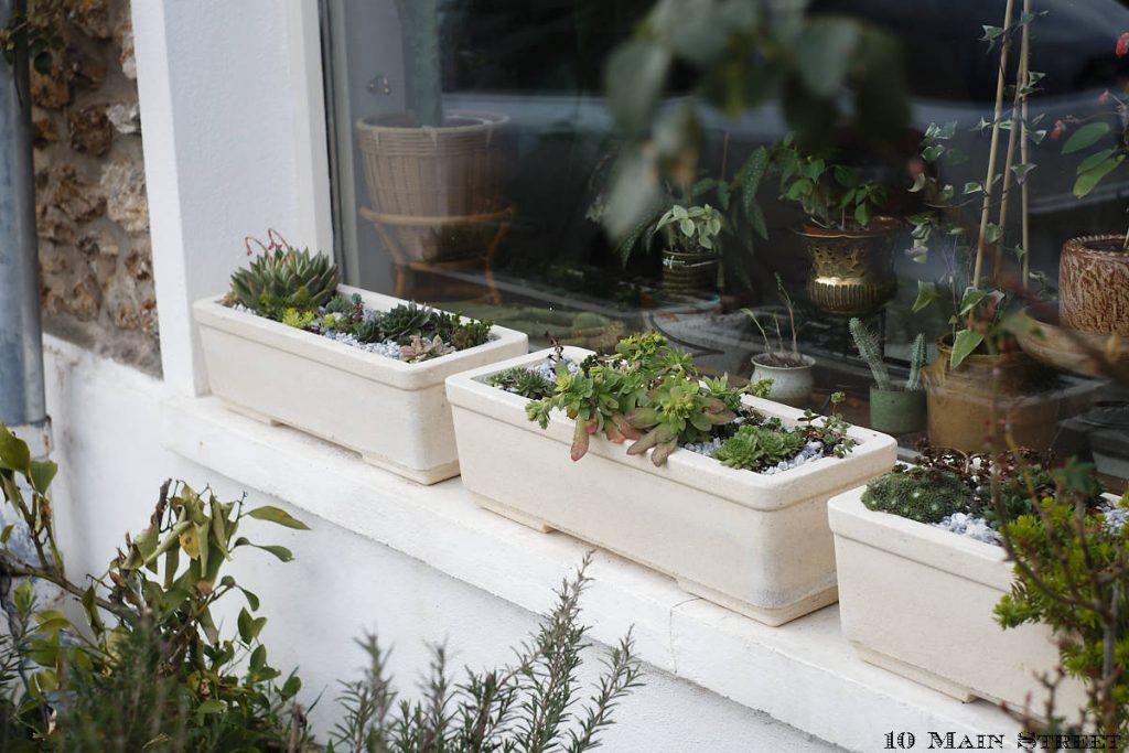 Nouvelles jardinières de plantes grasses