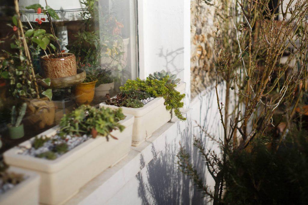Plantes grasses devant la maison