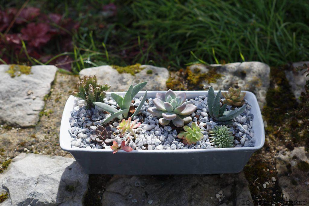 Terrine converties en jardinière