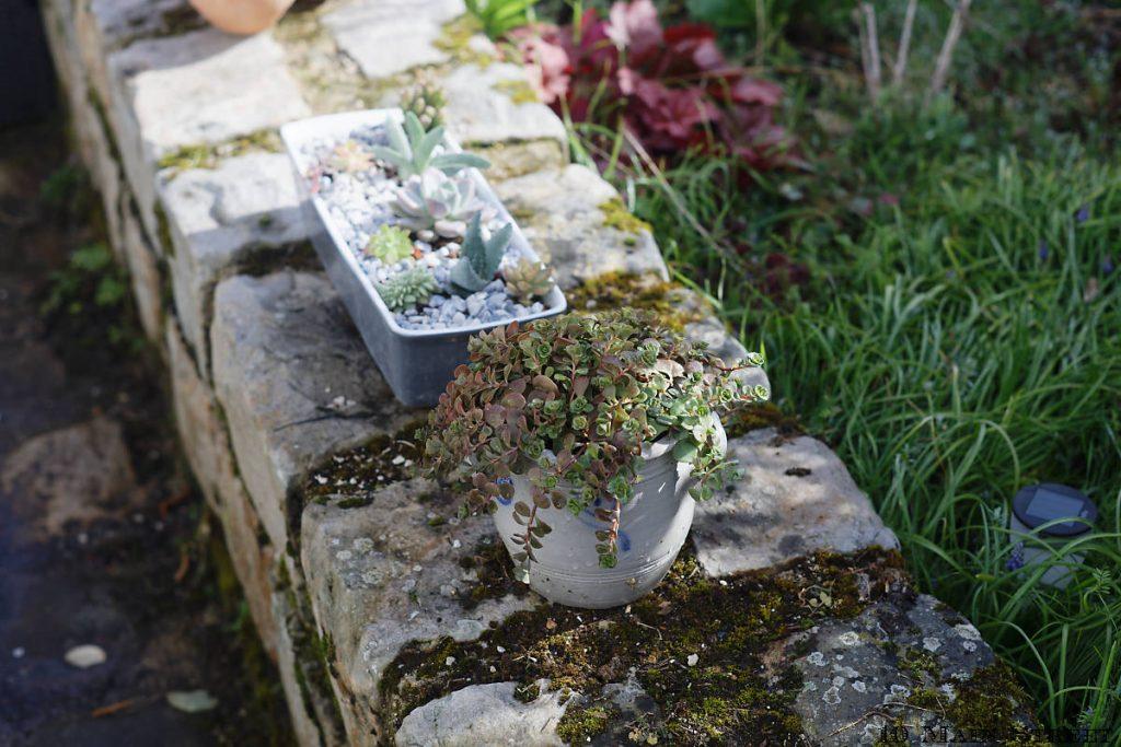 Terrine alimentaire convertie en jardinière